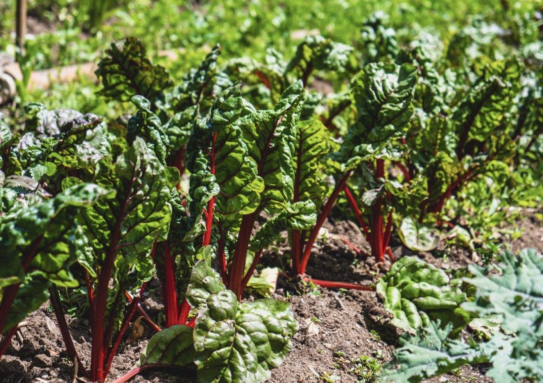 Agroecologia: presupposti e criteri